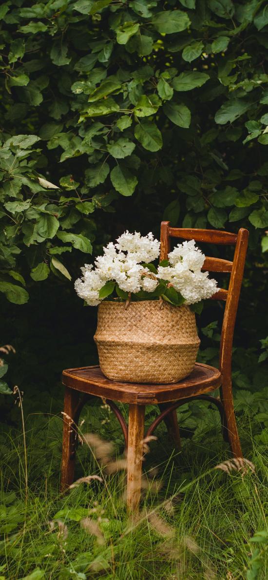 鲜花 椅子 树林 树枝 编织篮