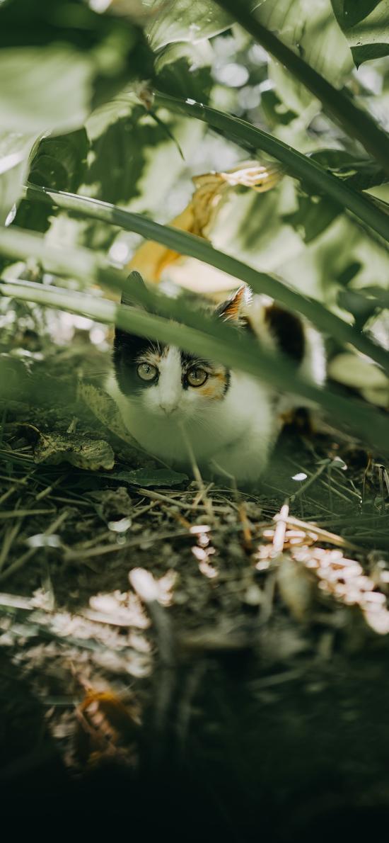貓咪 枝葉 野貓 躲避