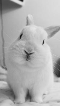 兔子 黑白 可爱 萌 宠物