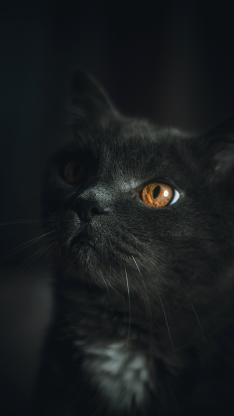 猫咪 黑猫 宠物 皮毛