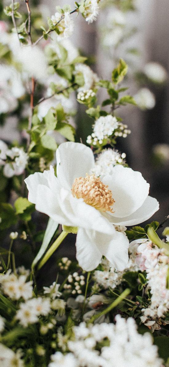 鲜花 花朵 枝叶 花蕊