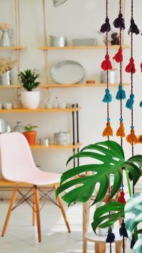 家居 室内 盆栽 龟背竹