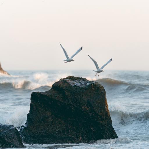 大海 岩石 浪花 海鸥