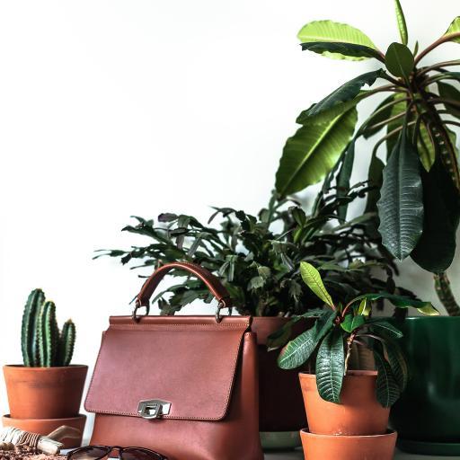 盆栽 绿植 绿化 皮包