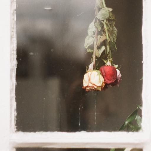 窗户 玫瑰花 倒挂 风干
