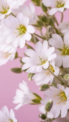 花朵 鲜花 盛开 花季