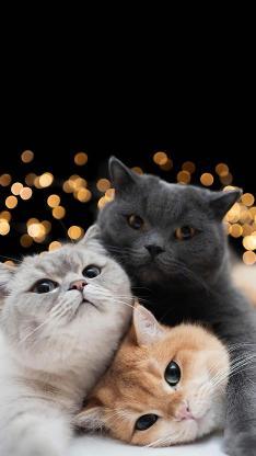 宠物 猫咪 萌宠 可爱