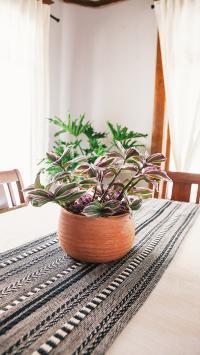 餐桌 盆栽 绿化 观赏