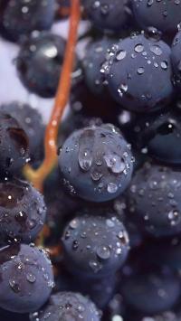 水果 葡萄 提子 水珠