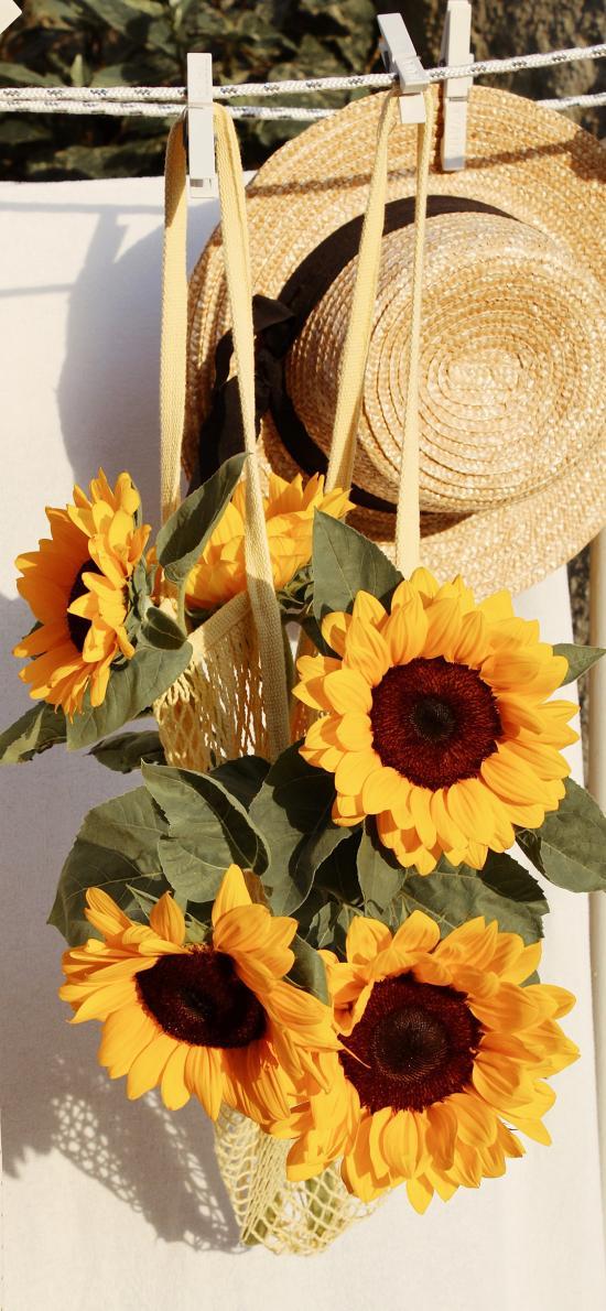 向日葵 鲜花 草帽 盛开 叶子