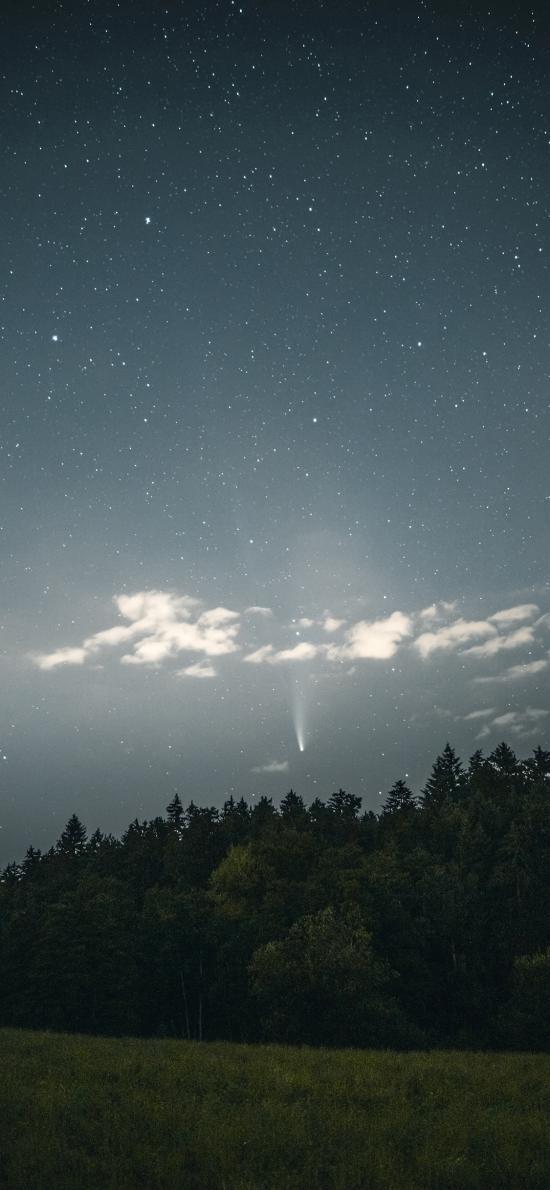 星空 夜景 草坪 森林