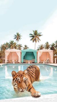 老虎 猛兽 凶猛 游泳池 椰树