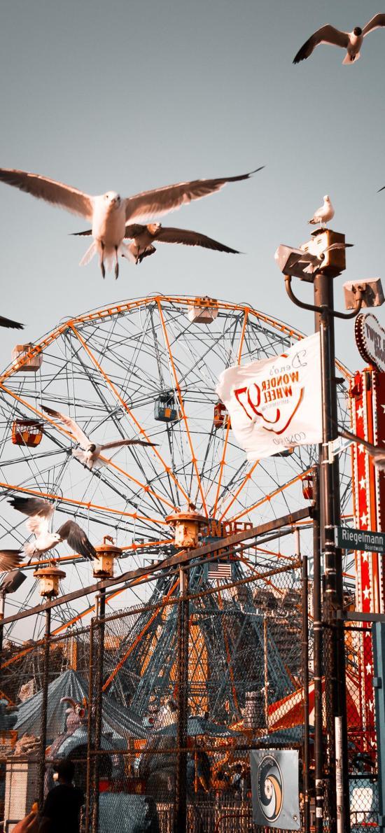 摩天轮 游乐场 娱乐设施 鸟