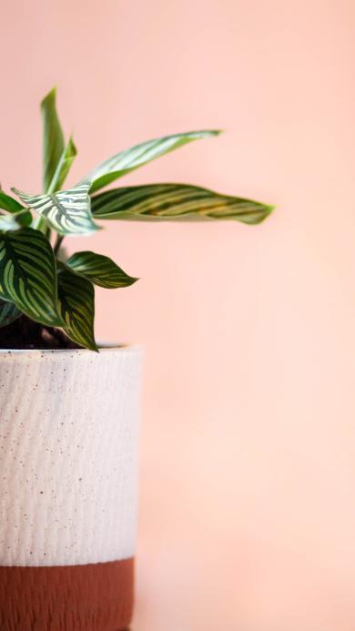 花盆 盆栽 绿植 绿化