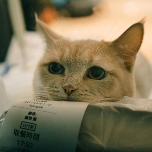 宠物 猫咪 可爱