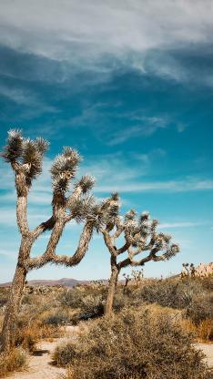 荒野 荒漠 绿植 蓝天