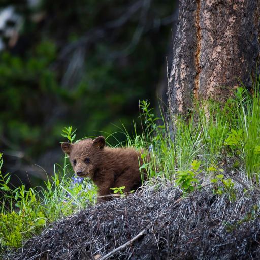小熊 熊仔 草坪 树干