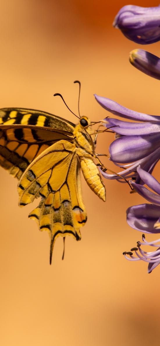 蝴蝶 花朵 采蜜 飞蛾