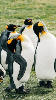 企鹅 草坪 可爱 站立