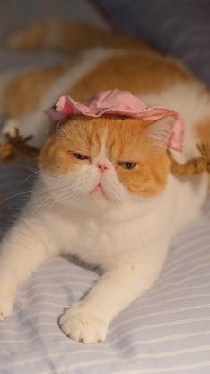 三宝猪猪 猫咪 宠物 网红猫