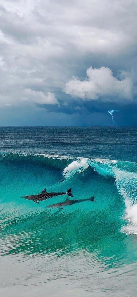 海洋 大海 海豚 海浪