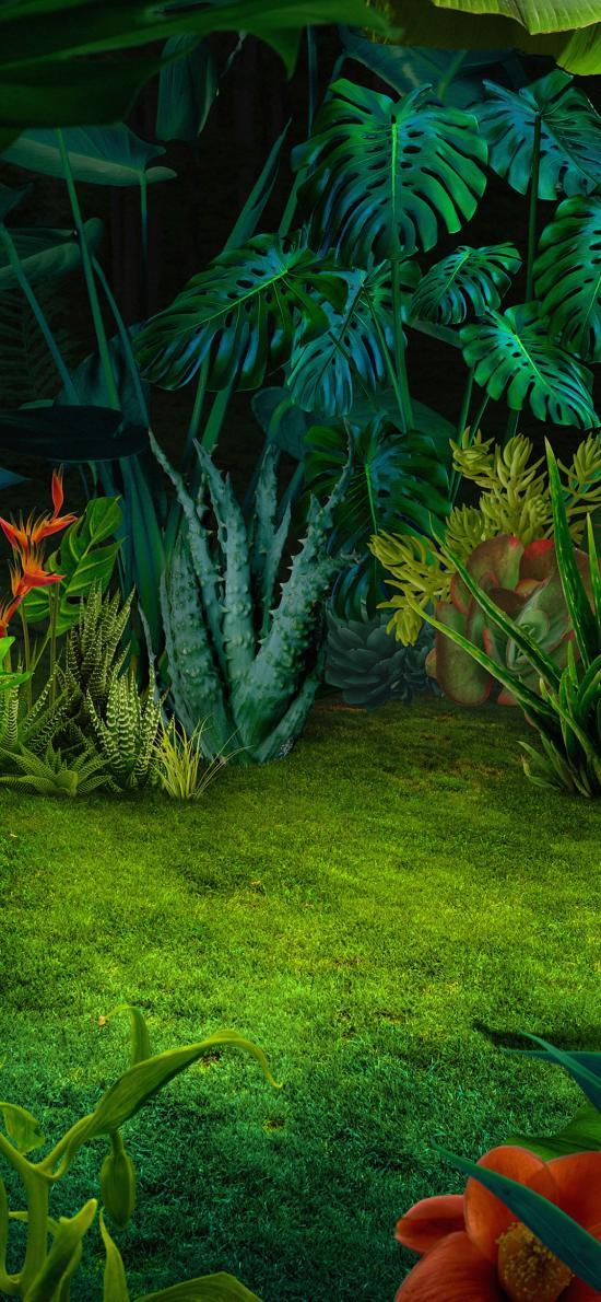 植被 种植 草坪 龟背竹 绿化
