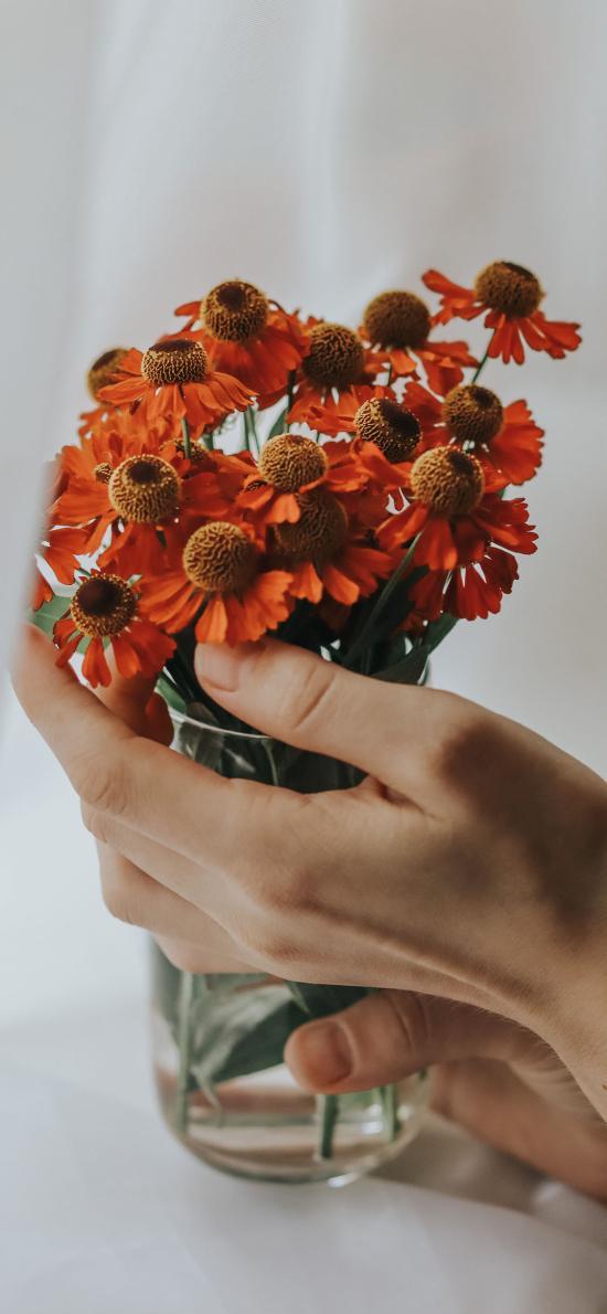 花瓶 鲜花 堆心菊 橙色