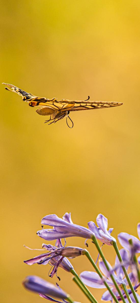 植株 鲜花 紫色 昆虫 蝴蝶