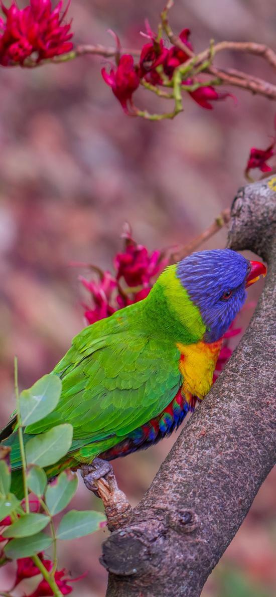 枝干 鹦鹉 飞鸟 彩色 羽毛