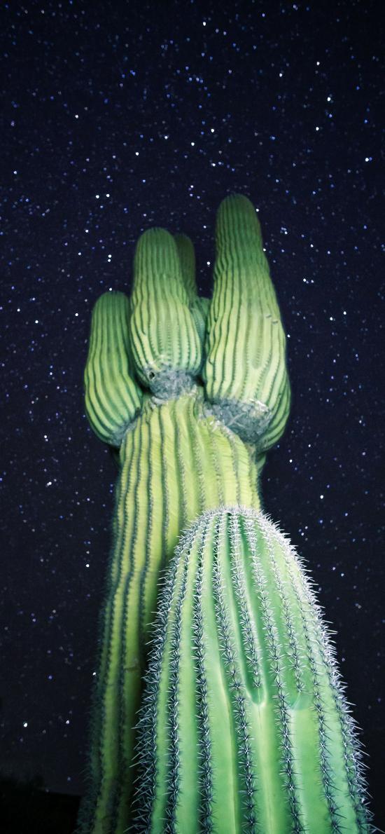 星空夜景 仙人掌 沙漠之花