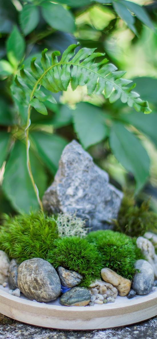 盆栽 景观 蕨类植物 石块