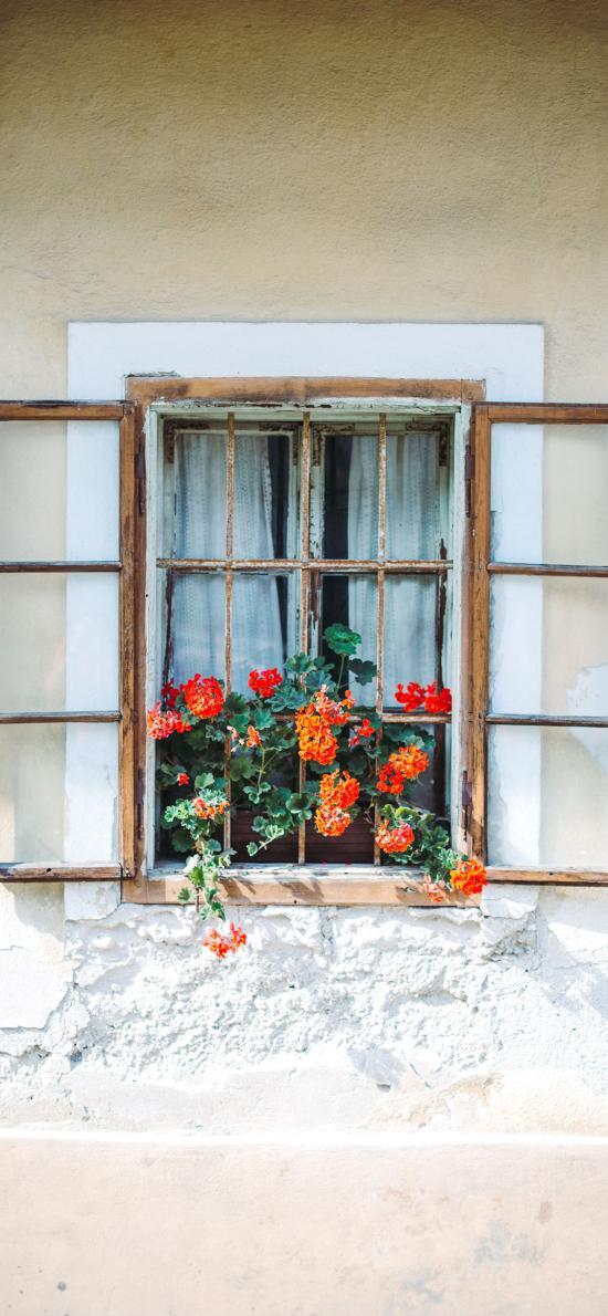 窗台 盆栽 鲜花 色彩