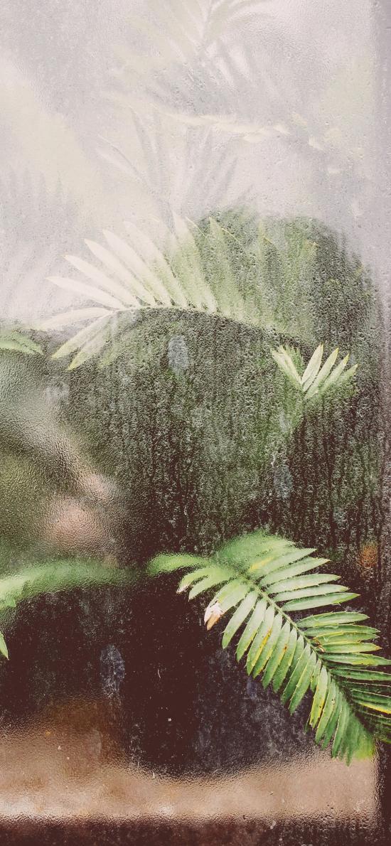 植株 叶子 绿化 朦胧
