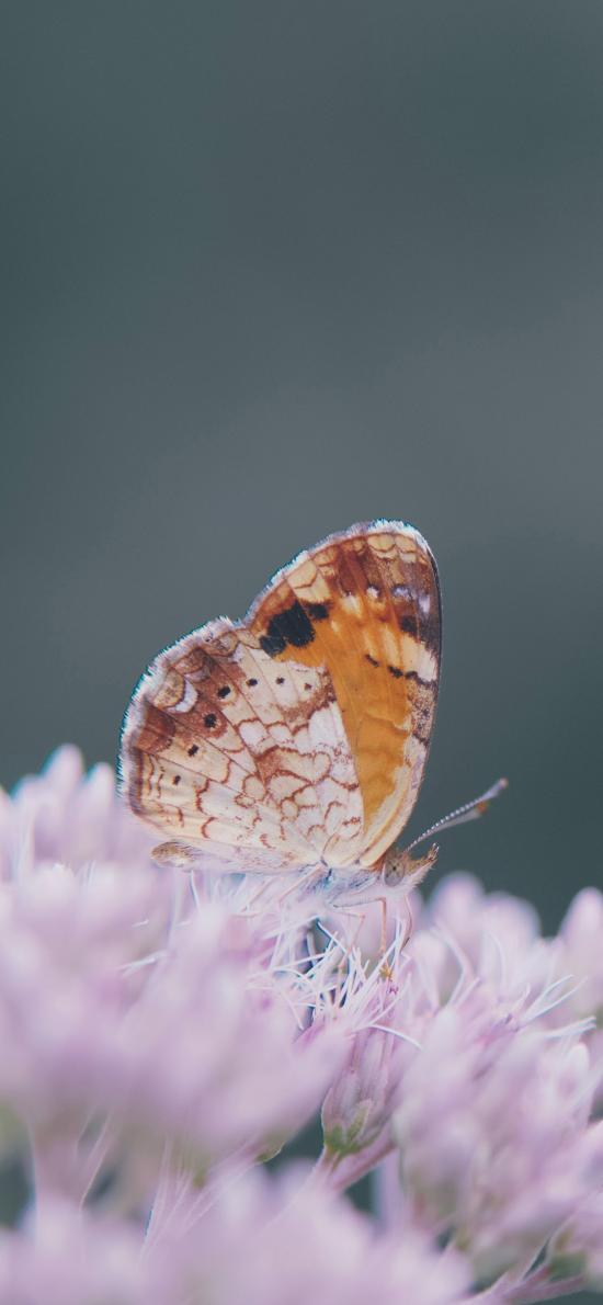 鲜花 紫色 昆虫 蝴蝶