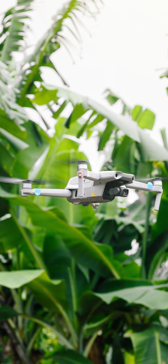 芭蕉树 科技 无人机 飞行