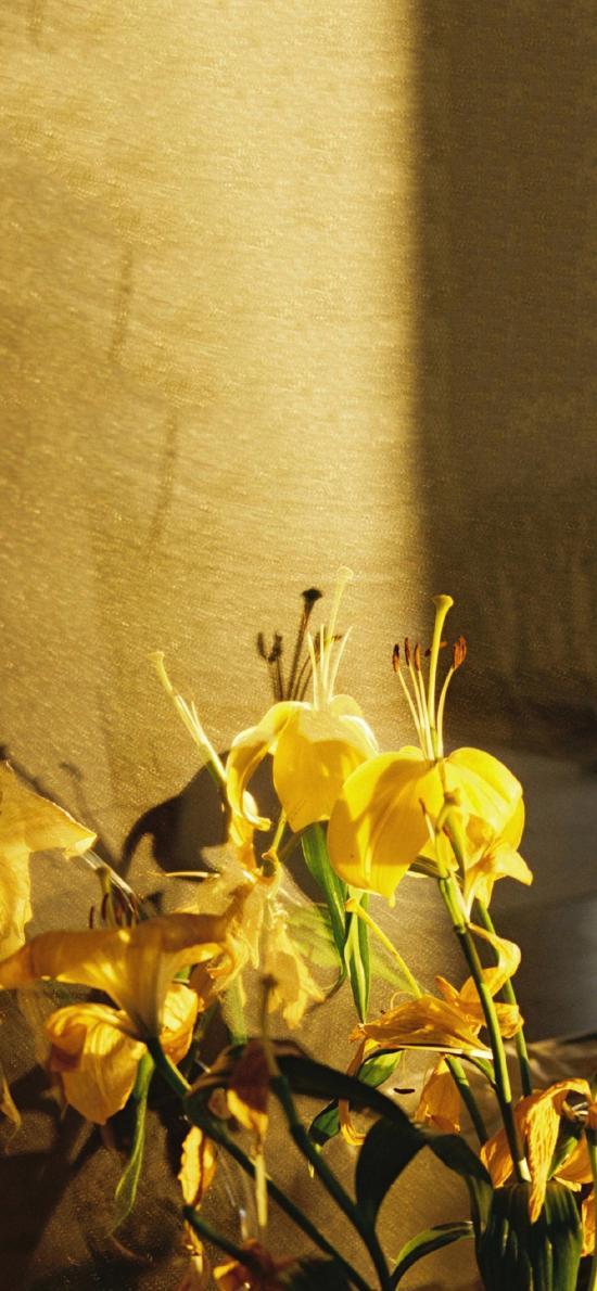 鲜花 蝴蝶兰 黄色 鲜艳