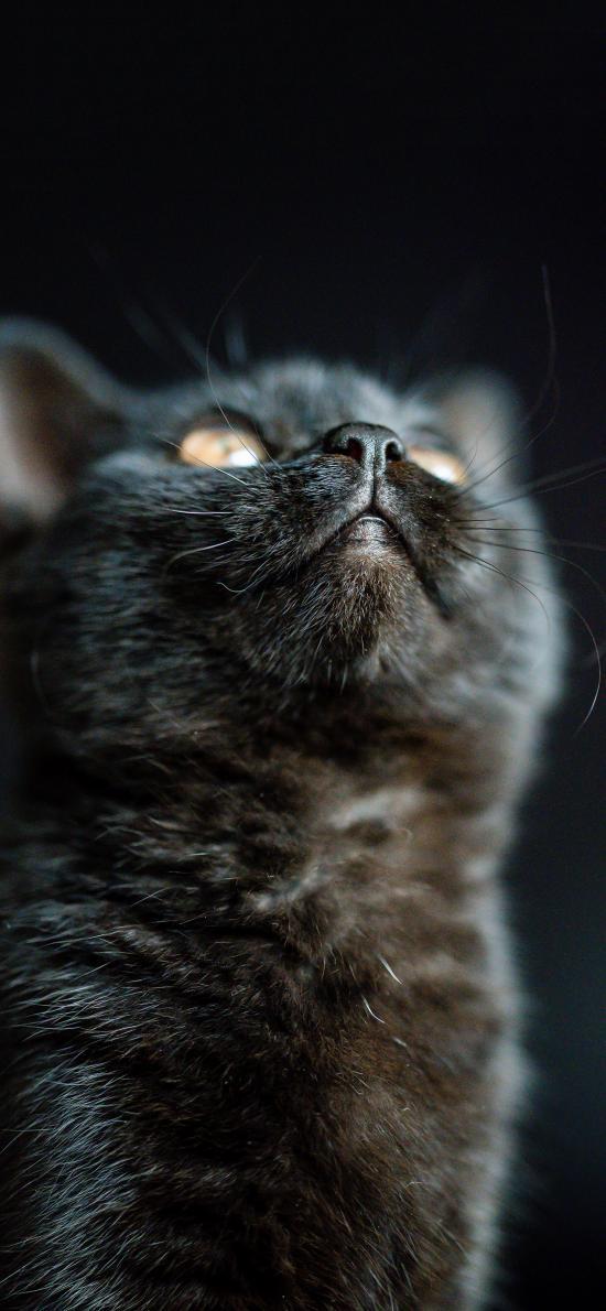 宠物 猫咪 喵星人 黑猫