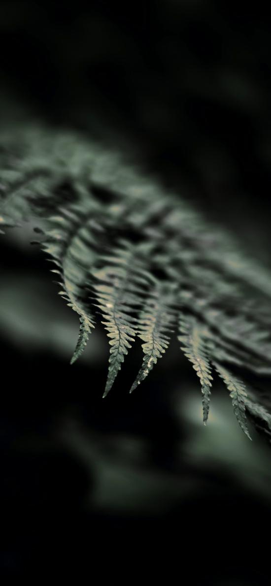 草本植物 蕨类 叶子