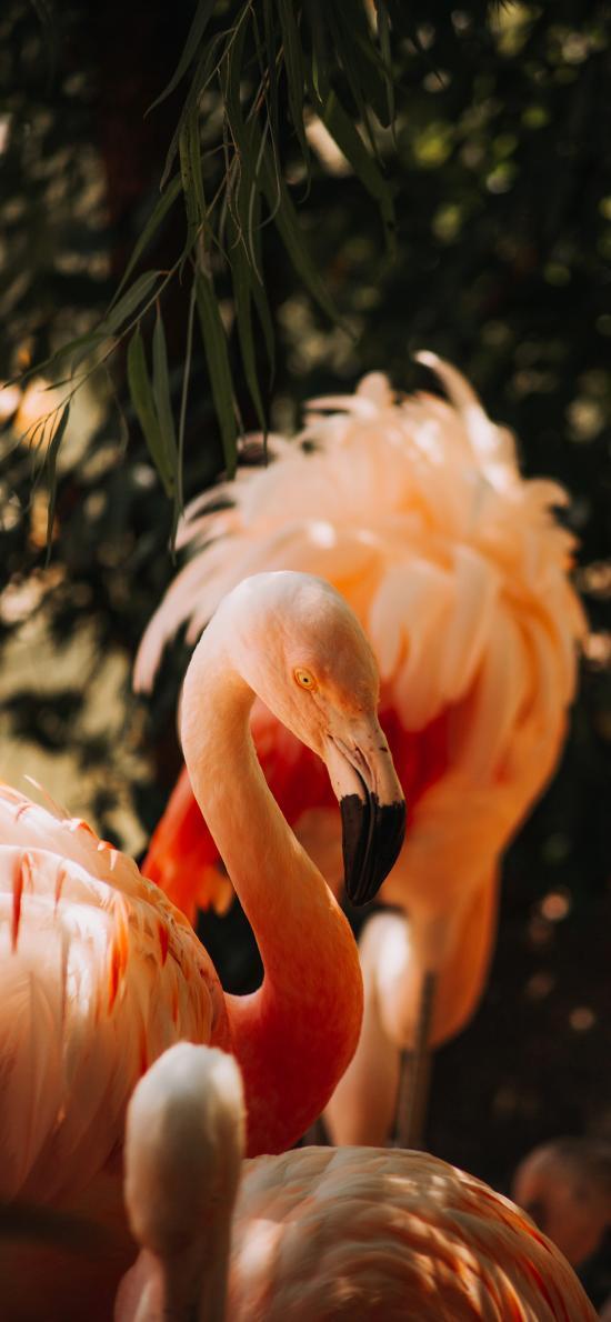 火烈鸟 羽毛 粉色 喙