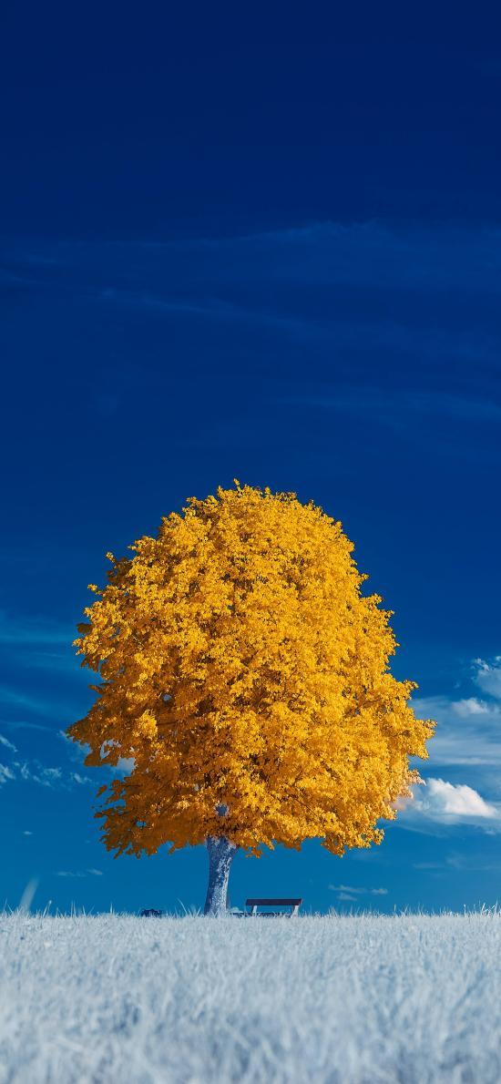 蓝天白云 树木 金色 树叶