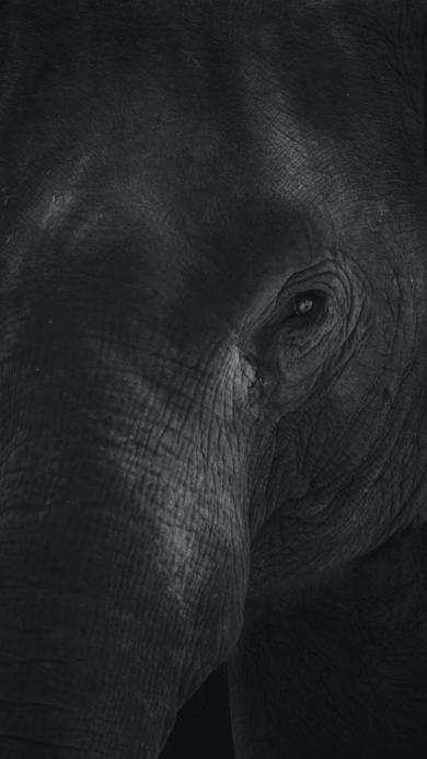 大象 眼睛 黑色 特写 皮毛
