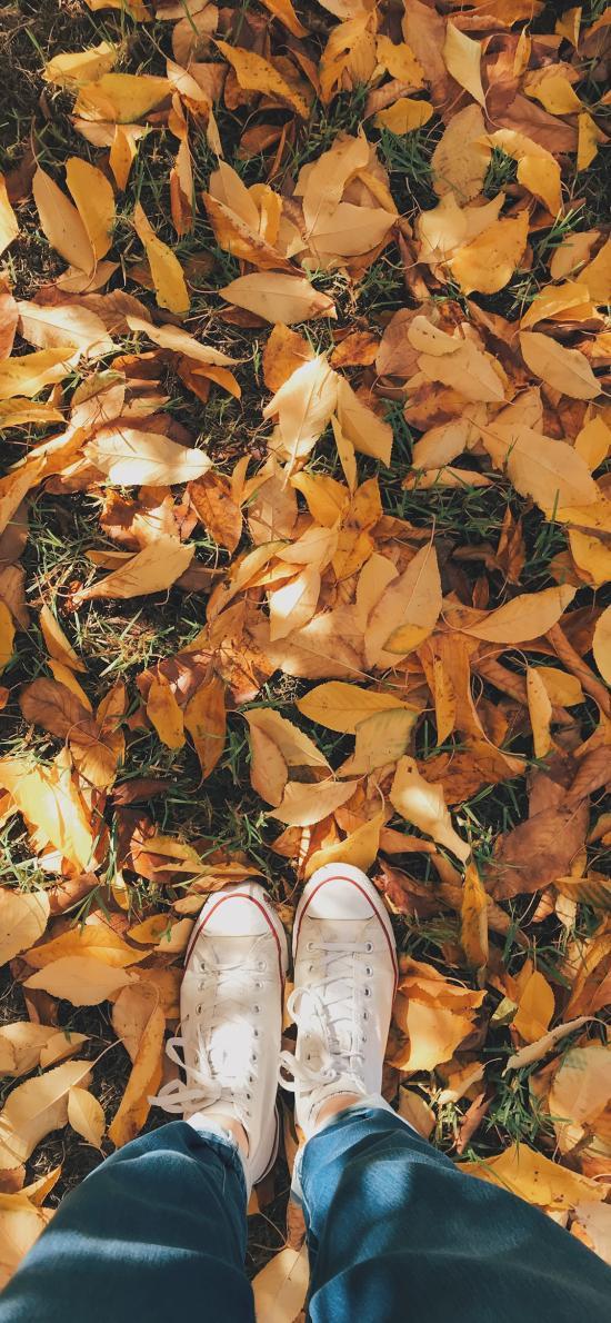 落叶 枯叶 枯黄 帆布鞋 秋季