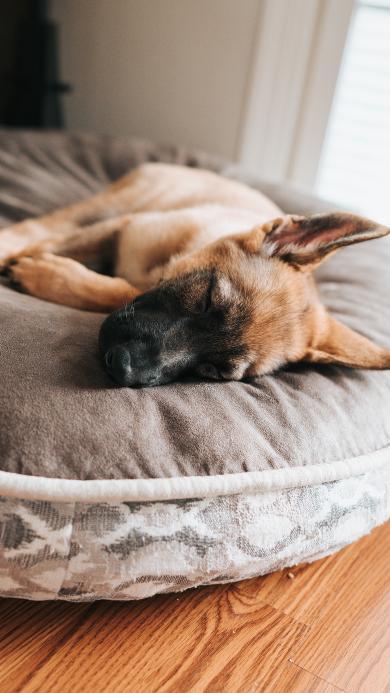 狗 休憩 宠物 睡窝