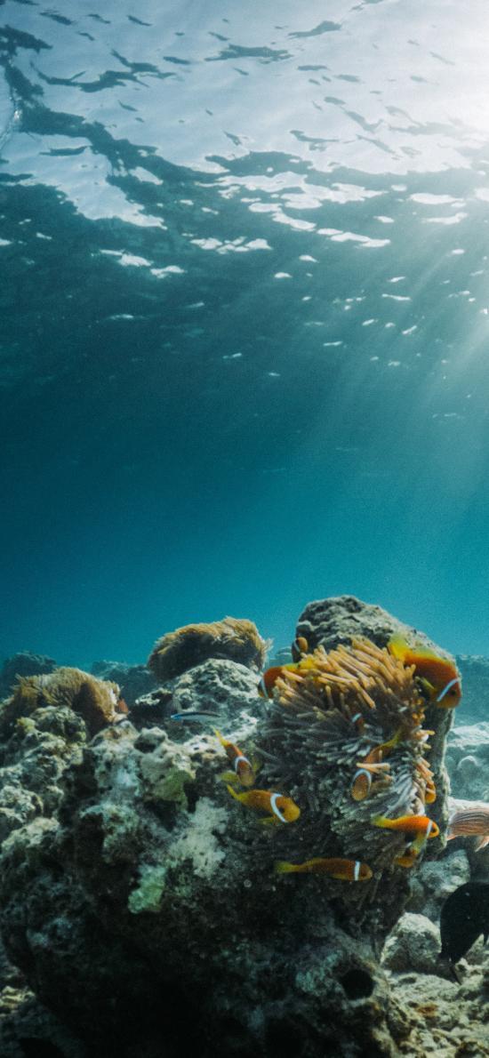 海底 珊瑚 鱼群 礁石 珊瑚礁