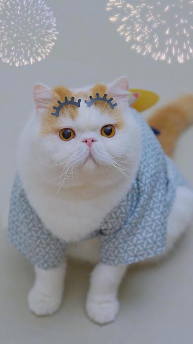 三宝猪猪 猫咪 宠物 网红猫 眉毛