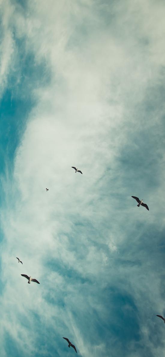 天空 飞鸟 云彩 鸟群