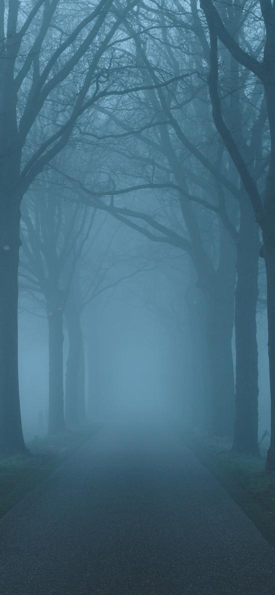道路 树木 林荫道 枝干 昏暗