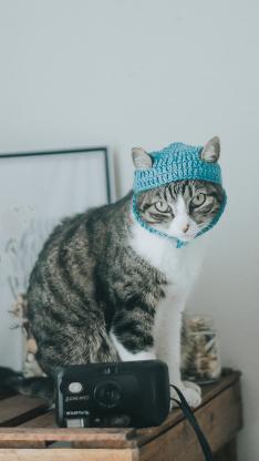 猫咪 喵星人 宠物 萌 相机