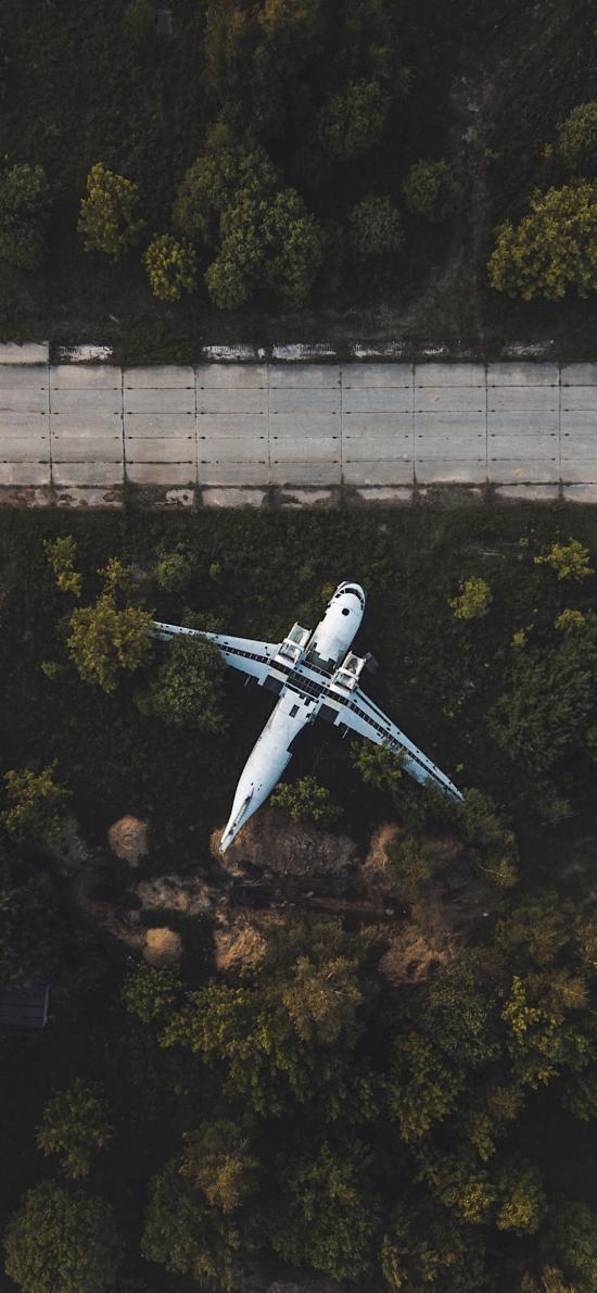 飞机 航空 停放 树木 道路