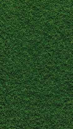 草地 草皮 绿植 绿化